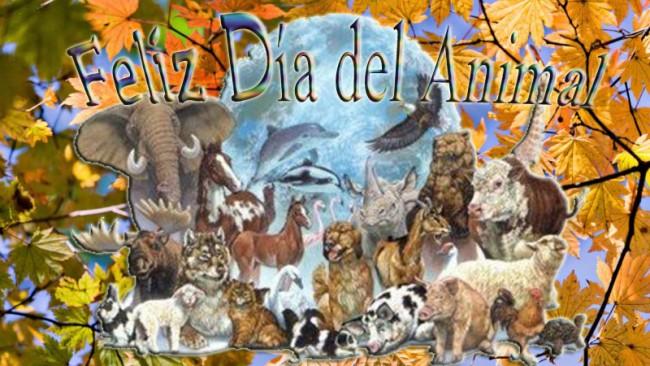 frases-para-el-dia-del-animal-dia-del-animal-argentina