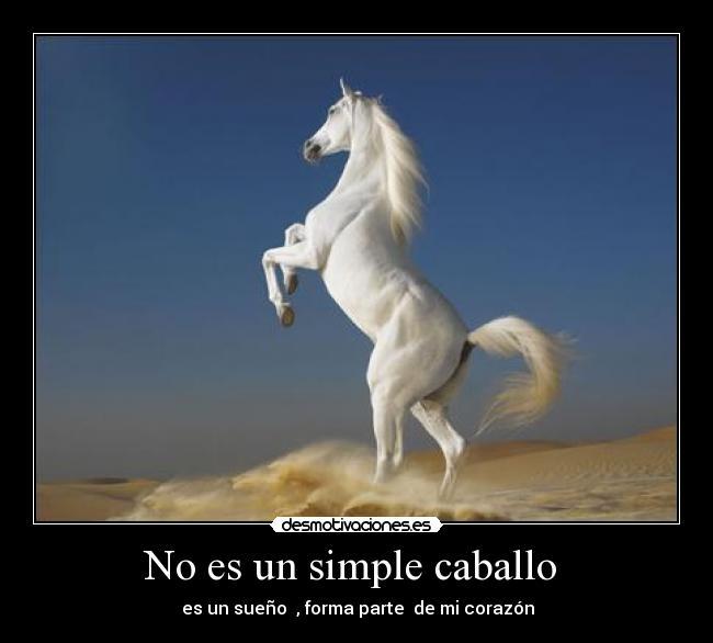 horses28