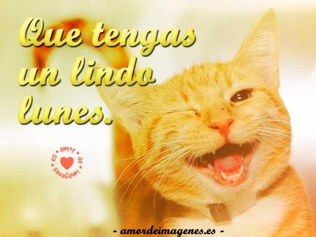 imagenes-para-compartir-el-lunes-gatito