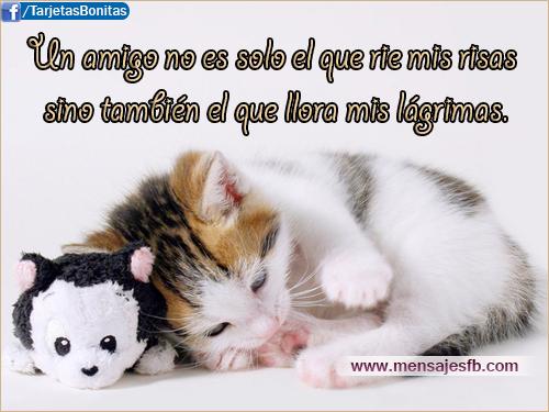 Imágenes de Gatitos con frases cortas Bonitas para Whatsapp