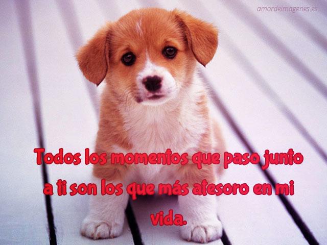 Imagenes Bonitas De Cachorros Lindos Imagenes Con Frases