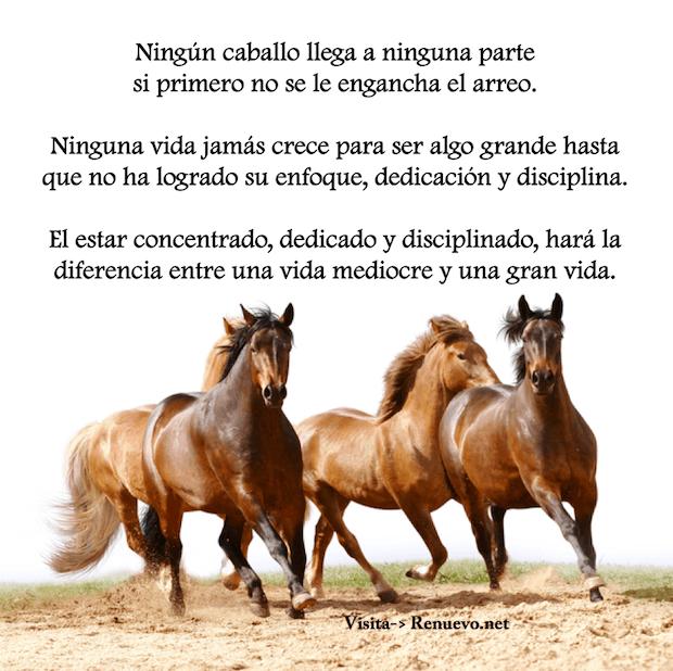prom-caballo18