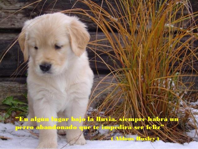 reflexiones-sobre-los-perros-26-638