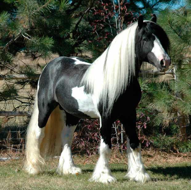 30 im genes de los caballos m s bonitos del mundo para - Fotos de los cuartos mas bonitos del mundo ...