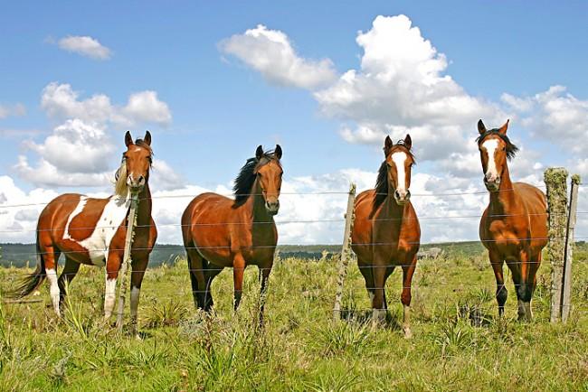 62346787.caballos