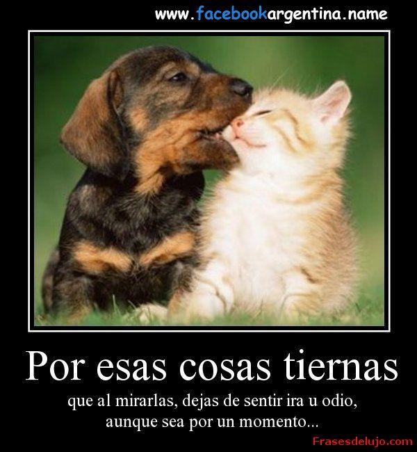 Animales Tiernos Con Mensajes De Amor Para Regalar