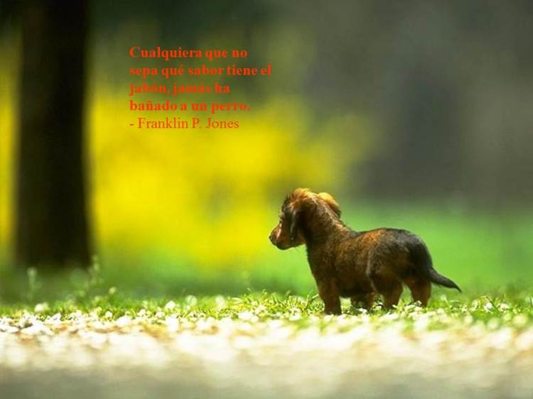 Animales-con-Frases-12