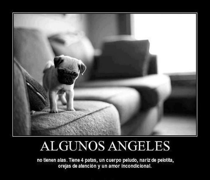 Animales-con-Frases-3
