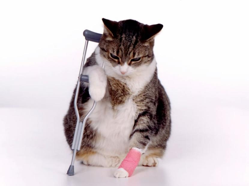 Gato_fracturado