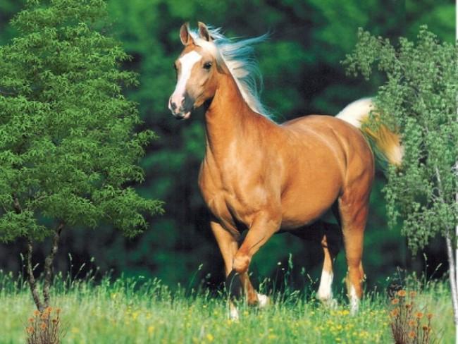 Imagenes-caballos