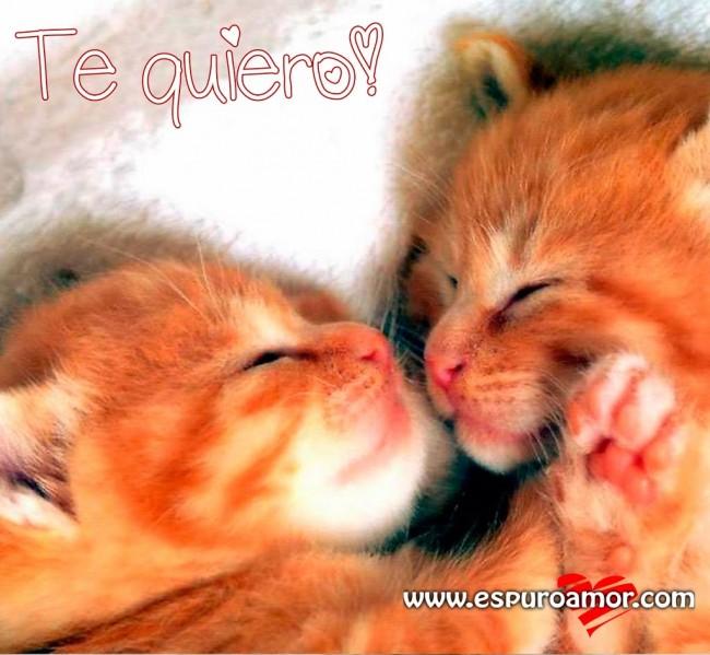 Pareja-de-gatitos-durmiendo-que-oarese-que-se-besan-te-quiero