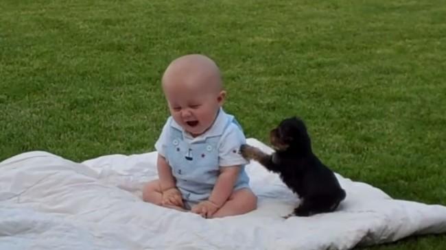 bebe-y-cachorro-de-yorkshire-jugando
