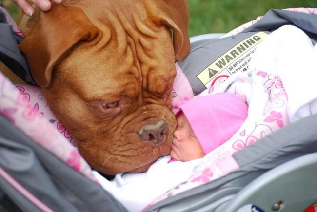 bebes_perros_gigantes-1