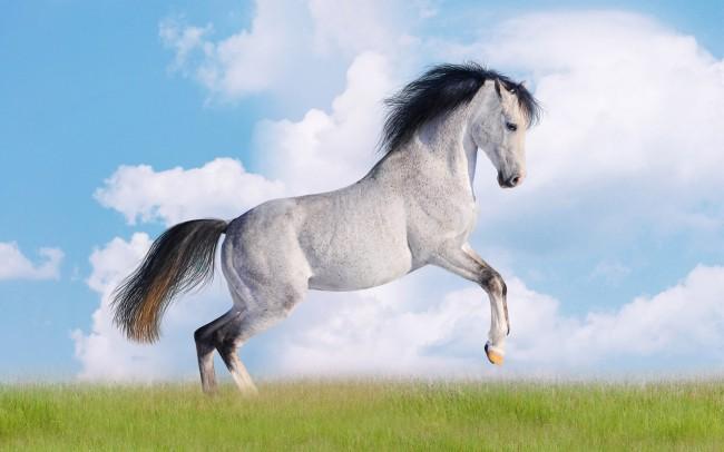 caballo-blanco-trotando-en-los-pastizales-