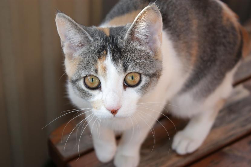 el_gato_es_un_animal_curioso