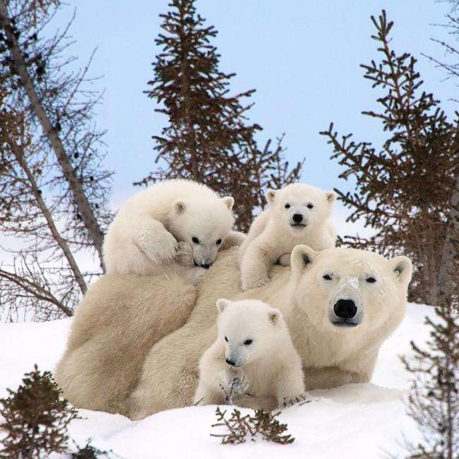 familia-de-animales