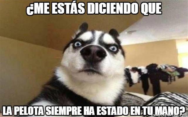 Husky Frases: Imágenes De Perros Y Gatos Graciosas Para El WhatsApp