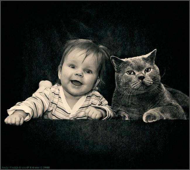 gatos-bebes-convivencia