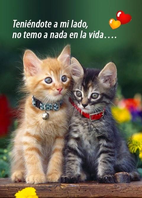 imágenes-para-descargar-para-el-whatsapp-de-animales