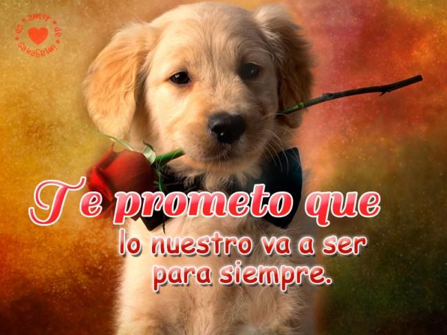 imagen-de-lindo-perrito-con-rosa-para-regalar-perritos-graciosos-y-tiernos-con-frases-de-amor-para-dedicar