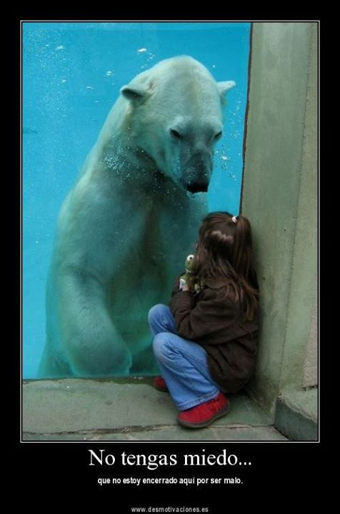 imagenes-con-frases-animales-tristes