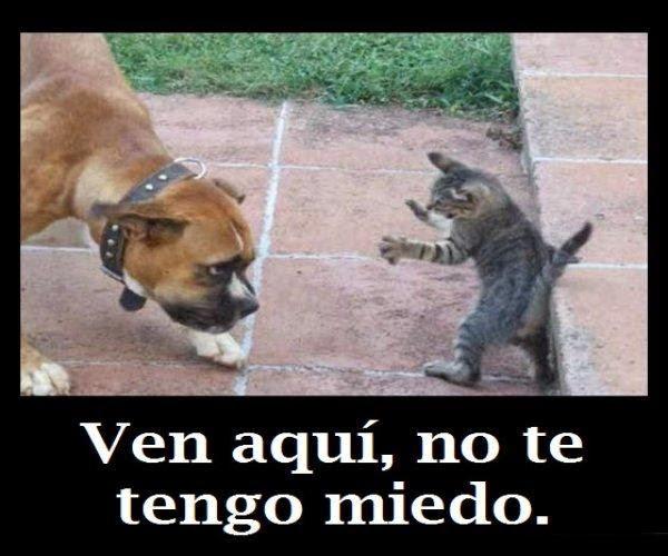 Imágenes de perros y gatos graciosas para el WhatsApp