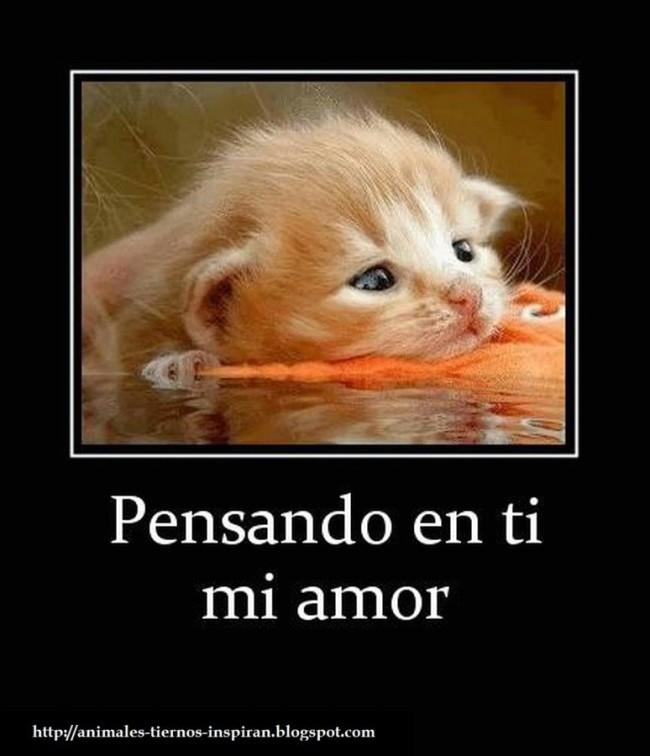 Romanticas Frases Con Imagenes De Animales Para Descargar