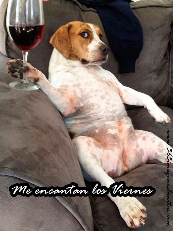 perro-con-copa-de-vino