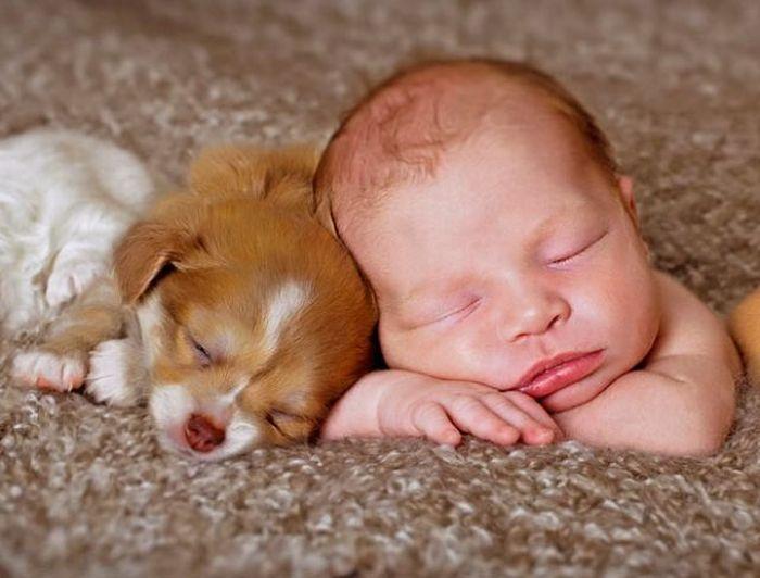perro-y-bebe