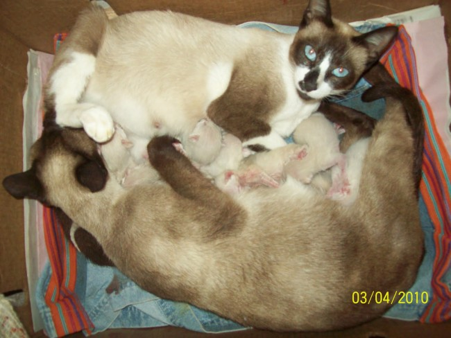 Imagenes De Gatitos Tiernos Para Descargar Gratis: Hermosas Imágenes Para Descargar De Gatitos Con Sus Crias
