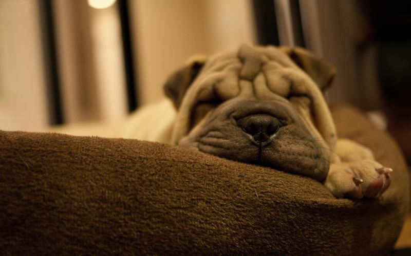 1404419558_dog-sleeping-on-a-sofa_800