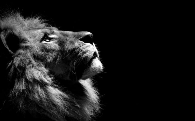1407184431_black-and-white-lion_800