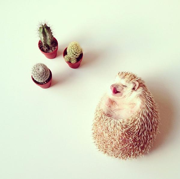 Cactus-decoracion-erizos-de-tierra-mascotas-cute-Darcy-PiensaenChic-Piensa-en-Chic
