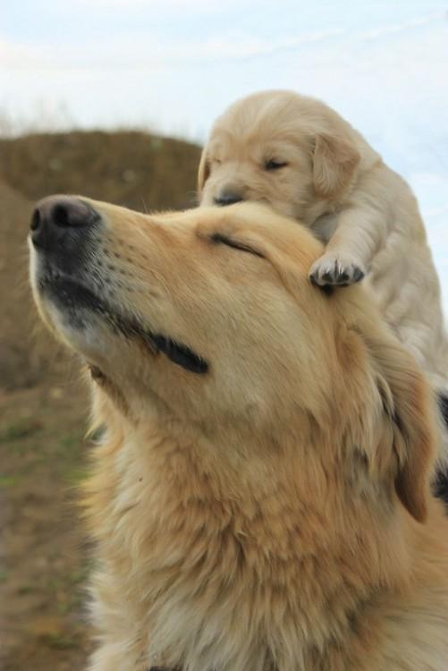 Fotografías-de-perros-con-sus-cachorros-14-501x750