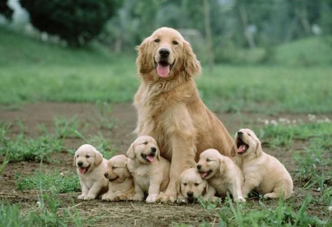 Fotografías-de-perros-con-sus-cachorros-23