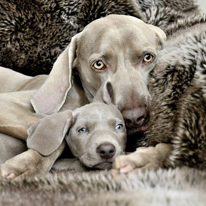 Fotografías-de-perros-con-sus-cachorros-3