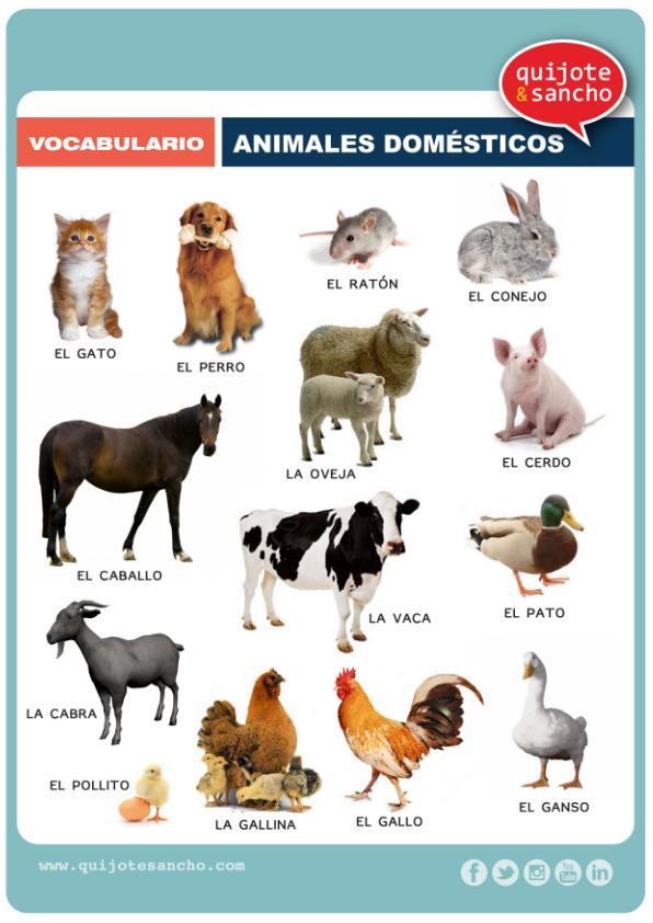 Láminas-para-trabajar-el-vocabulario-campo-semántico-animales-domesticos