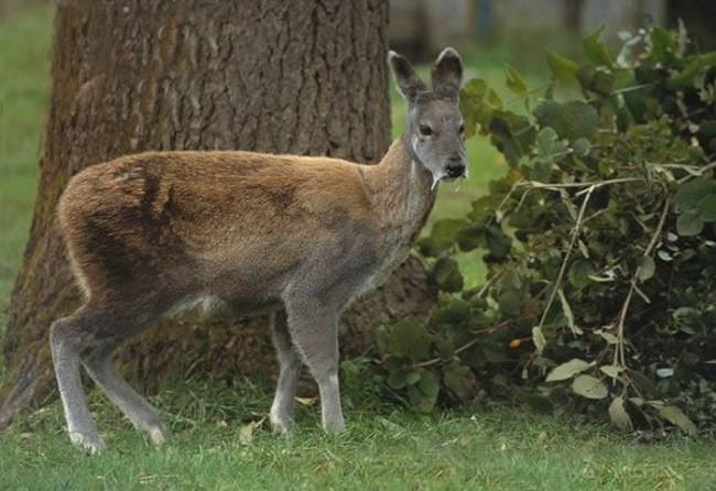 animales raros exoticos  (3)