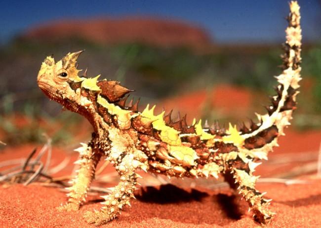 animales raros exoticos  (4)