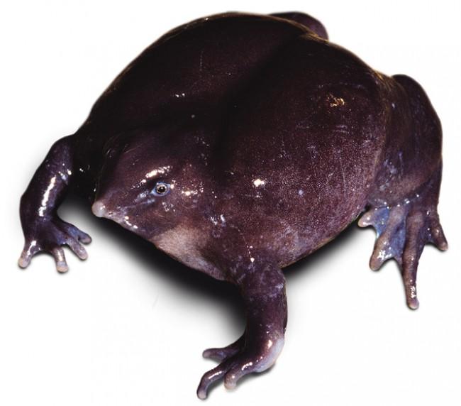 animales raros exoticos  (6)