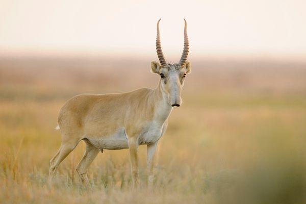 animales raros exoticos  (7)