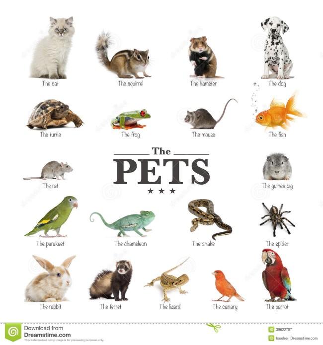 cartel-de-animales-domsticos-en-ingls-39622707