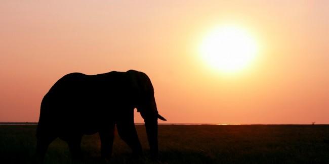 elefante-a-la-luz