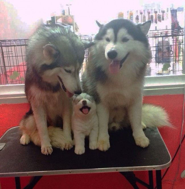 fotos-padres-perros-cachorros-2