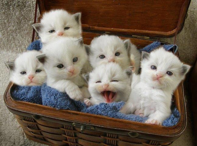 Hermosas Imágenes Para Descargar De Gatitos Con Sus Crias