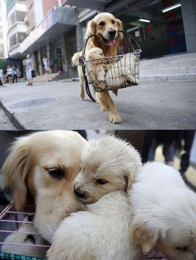 imagenes-perros-2