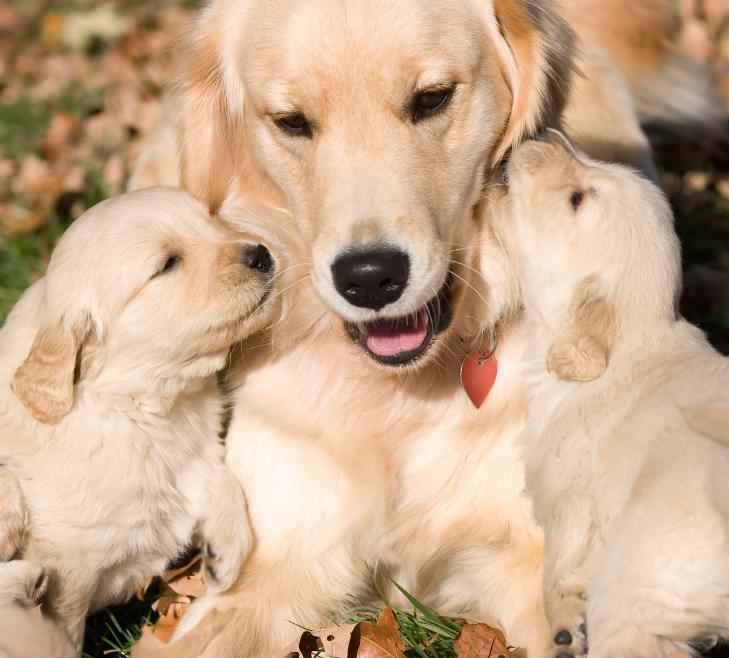 img_como_ayudar_a_mi_perra_a_cuidar_de_sus_cachorros_7377_orig