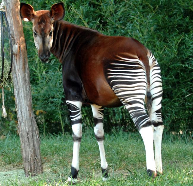 Hermosas imágenes para descargar gratis de animales de la selva