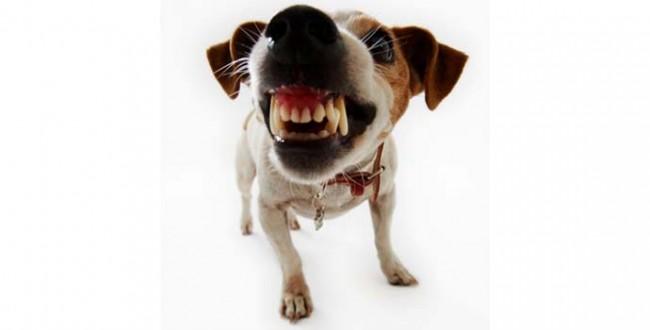 perro-es-agresivo-WP