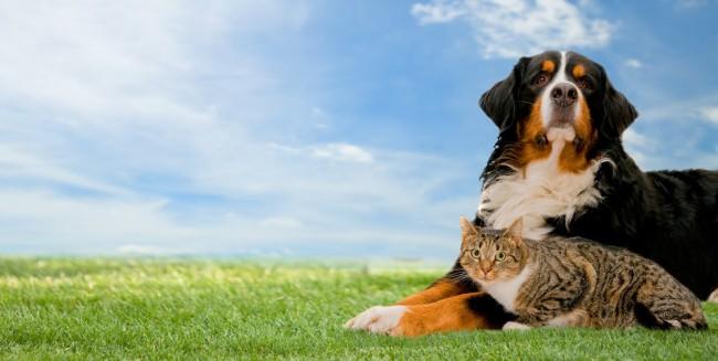 perro-san-bernardo-y-gatito-animales-amigos-portadas-para-facebook-covers